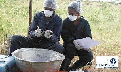 Relance des activit s de surveillance de la peste for Chambre de commerce de madagascar